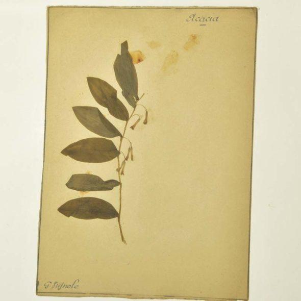 J 86 – Planche d'herbier